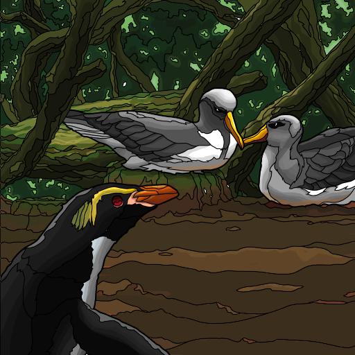 pack2_albatross